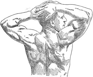 German professional strong man. A view of Sandow's back