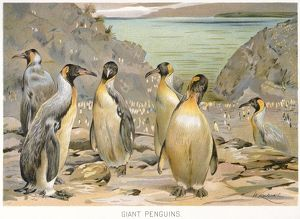 GIANT PENGUINS, c1900. American lithograph.