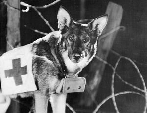 RIN-TIN-TIN (1916-1932). American canine actor