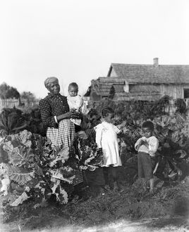 SHARECROPPER FAMILY, 1902. Sharecropper family in their collard patch near Snow Hill