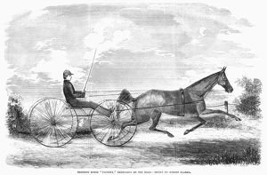 Trotting horse 'Taconey,' exercising on the road. Wood engraving, American, 1853